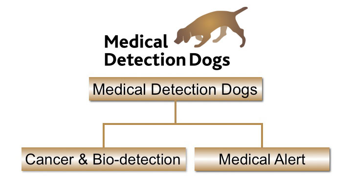 Medical Detection Dogs Structure